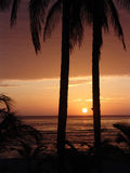 Sunrise. With palmtrees at the beach in Costa Rica Stock Photo