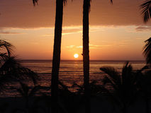 Sunrise. With palmtrees at the beach in Costa Rica Royalty Free Stock Image