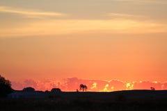 Sunrise02 Immagini Stock