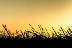 Sunrise above corn fields Stock Images