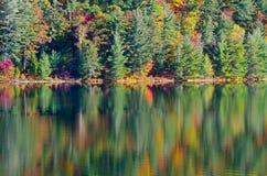 Sunrise above forest lake Royalty Free Stock Images