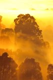 Sunrise above the tree in the clouds Royalty Free Stock Photography