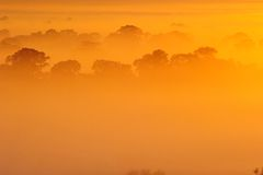 Sunrise above the tree in the clouds Stock Image