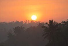 Sunrise above tropical palm jungle with sun rays ang thick morning Stock Photos
