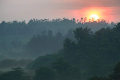 Sunrise above tropical palm jungle with sun rays ang thick morning Stock Images