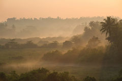 Sunrise above tropical palm jungle with sun rays ang thick morning. Wonderful sunrise above tropical palm jungle with sun rays ang thick morning fog Stock Photos