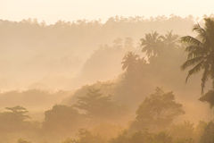 Sunrise above tropical palm jungle with sun rays Stock Photos