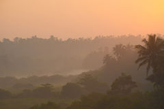 Sunrise above tropical palm jungle and thick morning fog Stock Photo