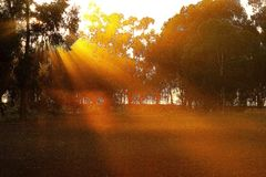 Sunrise Across Paddock. The suns rays were strong as they glowed through the tree casting a bright array of beams to lighten the day. Sunrise actually occurs Royalty Free Stock Photography