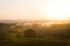 Sunrise across vineyard Stock Photo