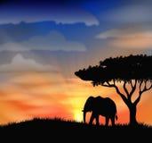 Sunrise at africa Stock Image