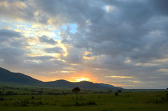Sunrise in african savanna, Kenya, Africa Royalty Free Stock Photo
