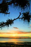 Sunrise Against Pandanus Stock Photography