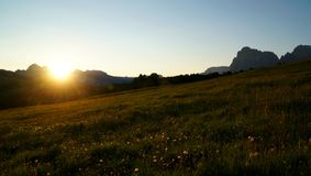 Sunrise on alp in the dolomites with beautiful flowers royalty free stock photography