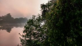 Sunrise with Anhinga. Sunrise on a creek with anhinga in the tree royalty free stock photography