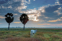 Sunrise at Anlung Pring Protected Landscape Stock Images