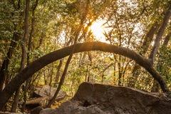 Sunrise At Pha Taem Thailand Stock Photo