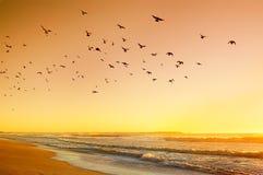 Sunrise on the Atlantic Ocean. Beautiful sunrise on the Atlantic Ocean. Rolling waves in the warm sunshine,   lot of birds in the sky Stock Photo