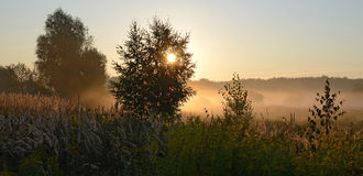 Sunrise in August. The sun illuminates the mist creeping along the ground royalty free stock images