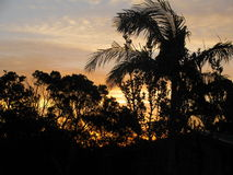 Sunrise in Australia Through the Trees Stock Photography