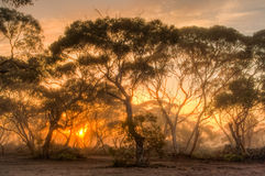 Sunrise in the Australian bush Stock Image