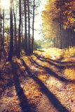 Sunrise in autumn forest Royalty Free Stock Photos