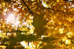 Sunrise in autumn forest. royalty free stock photo