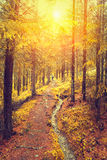 Sunrise in autumn forest Stock Photography