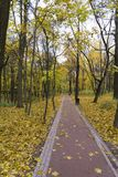 Sunrise in autumn forest. Walking path in the Park autumn day. Tsaritsyno Park, Moscow Stock Photography
