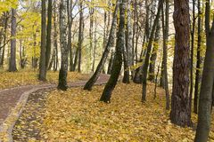 Sunrise in autumn forest. Walking path in the Park autumn day. Tsaritsyno Park, Moscow Royalty Free Stock Images