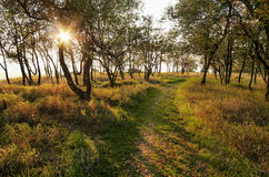 Sunrise in the autumn woods and frozen grass Royalty Free Stock Image