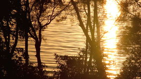 Sunrise Background 1. Sparkling reflections of sunlight on water seen through trees at sunrise stock video footage