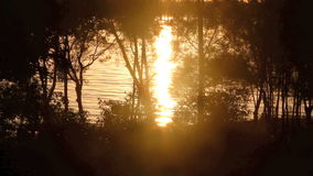 Sunrise Background 2. Sparkling reflections of sunlight on water seen through trees at sunrise stock video