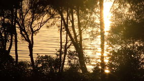 Sunrise Background 3. Sparkling reflections of sunlight on water seen through trees at sunrise stock video