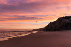 Sunrise Baleal watched by a surfer on the cliffs. Royalty Free Stock Photography