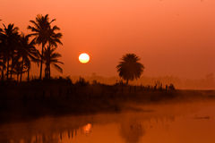 Sunrise in bangalore. Sunsrise at ramohalli bangalore the palm trees being the silhouttes against a great sun royalty free stock photography