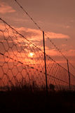 Sunrise barbed wire. Royalty Free Stock Photo
