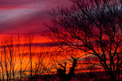 Sunrise through bare trees. Colorful tequilla sunrise as seen through bare trees in winter Royalty Free Stock Photos