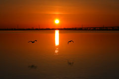 Sunrise On The Bay. Birds Flying Over Water Stock Images