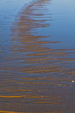 Sunrise beach Royalty Free Stock Photography