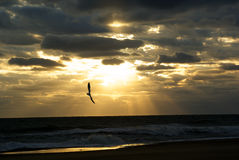Sunrise at the Beach. Cloudy sunrise with sea gull flying Stock Images