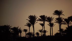 Sunrise on the beach around the ocean and palm trees. The wind shakes the leaves of trees stock video footage
