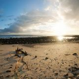 Sunrise on beach with branch in foreground Royalty Free Stock Photos