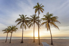 Sunrise at the beach in Florida. Palm trees at sunrise in Hollywood Beach. Florida, United States Stock Image