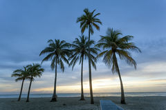 Sunrise at the beach in Florida. Palm trees at sunrise in Hollywood Beach. Florida, United States Stock Photo