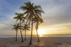 Sunrise at the beach in Florida. Palm trees at sunrise in Hollywood Beach. Florida, United States Stock Photos