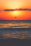 Sunrise on the beach. Sunrise at seaside with sun, waves and birds in the morning Stock Image