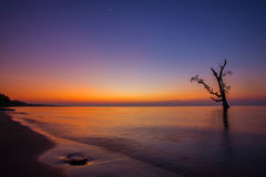 Sunrise at the beach with silhouette tree. The beautiful morning scene at the beach Stock Images