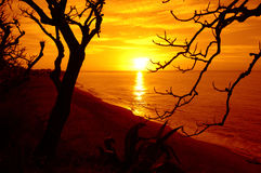 Sunrise beach trees view stock photography