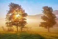 Sunrise beams through the foggy tree stock photography